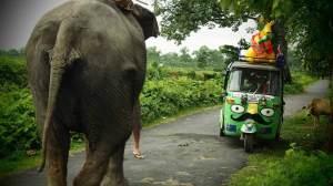 Rickshaw elephant